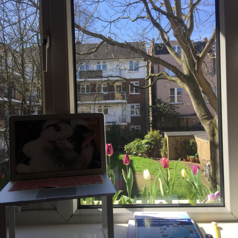 Photo of an elevated desk with spring tulips out the window view