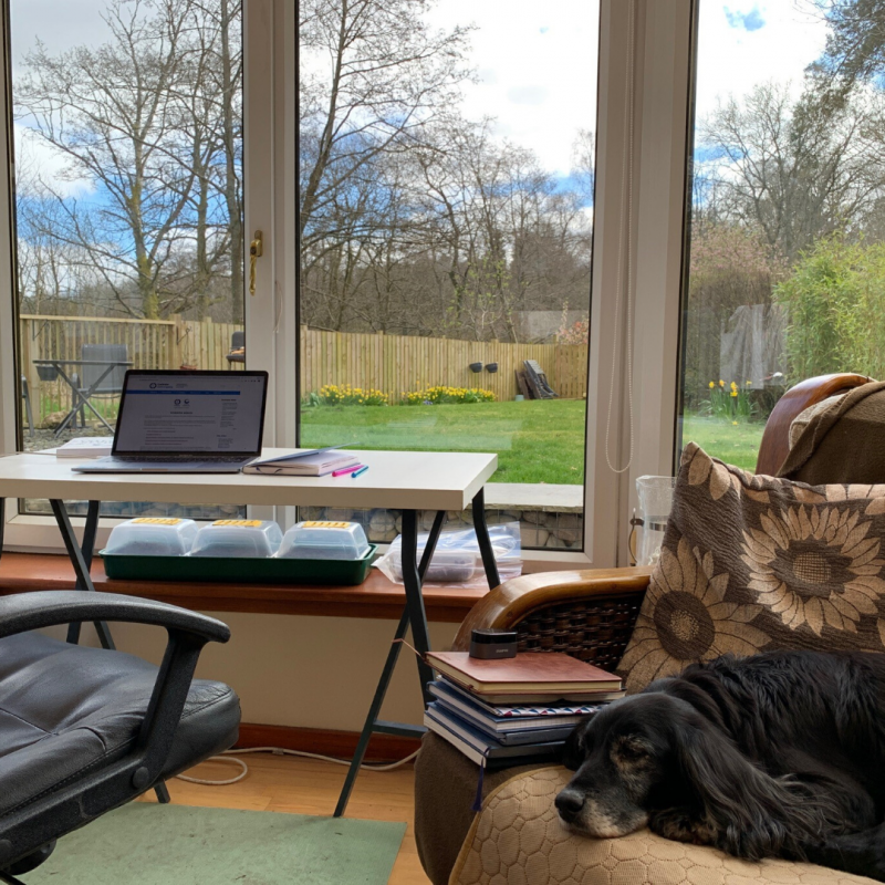 Image of desk with garden view, with couch next to it with a dog on it
