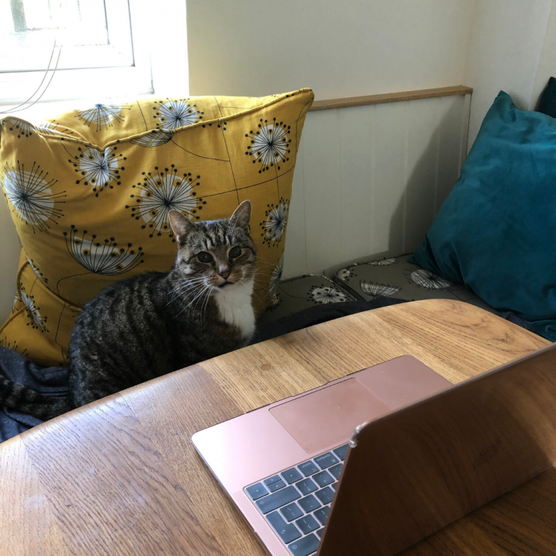 Picture of a computer on a table, a flowered pillow, and a cat